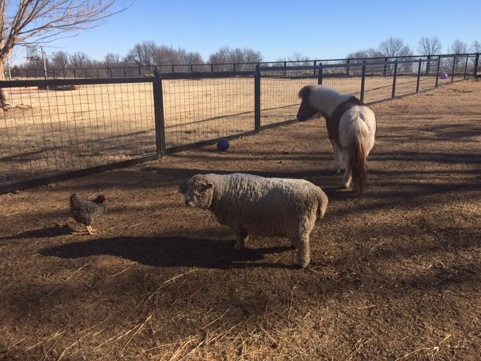 Hog Wire Fence to Keep Animals In